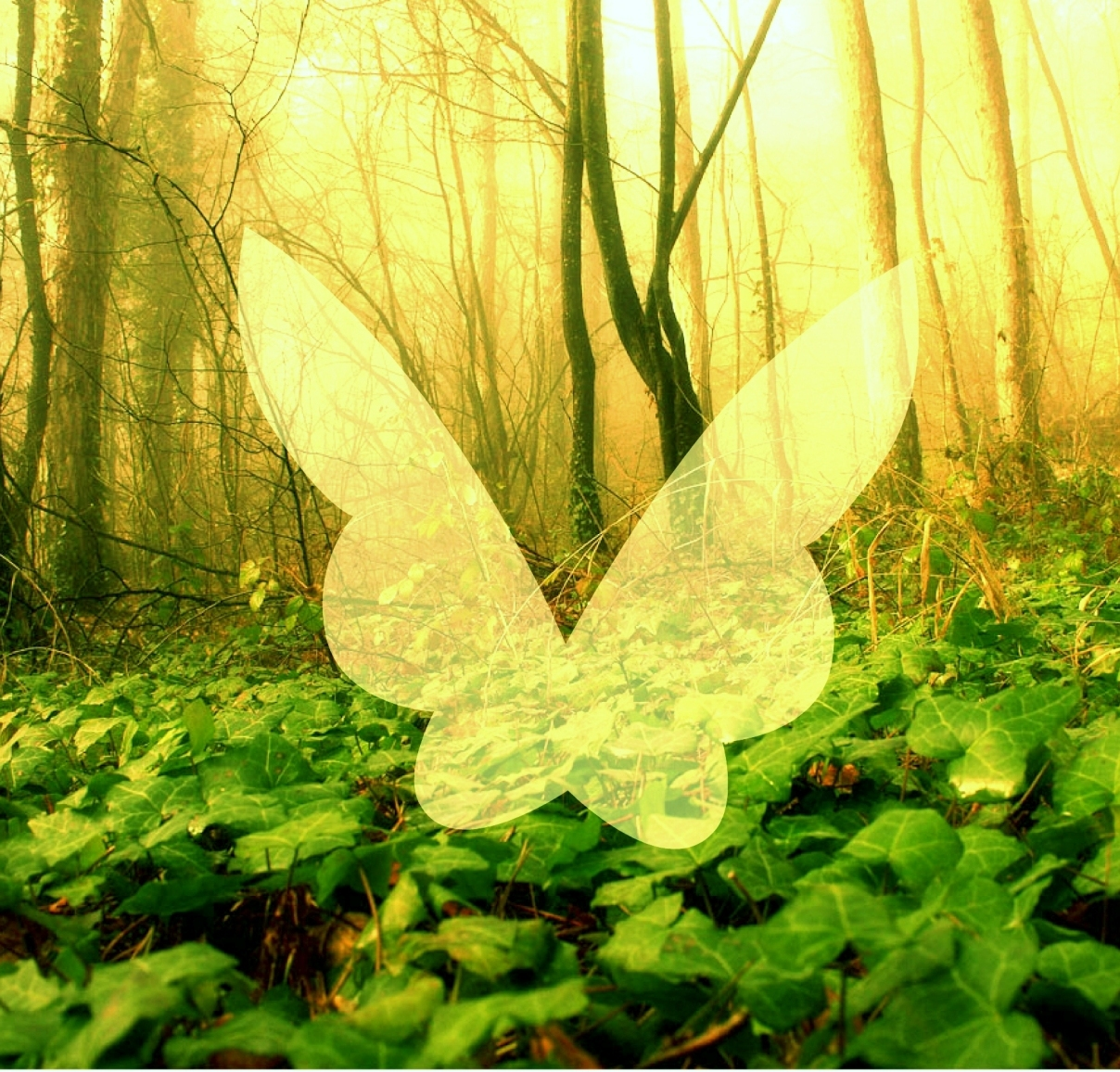 Fairy forest image with translucent fairy wings digital scrapbook freebie